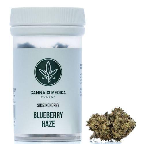 susz konopny blueberry haze 1